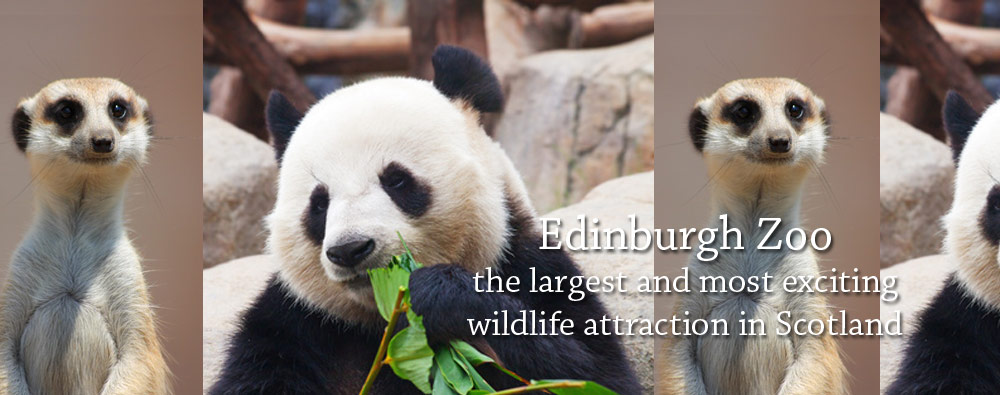 Edinburgh Zoo - the largest and most exciting wildlife attraction          in Scotland